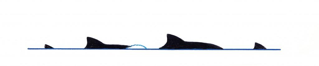 Harbour porpoise (Phocoena phocoena) - dive sequence