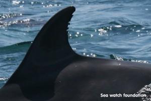 Sea Watch Foundation copy
