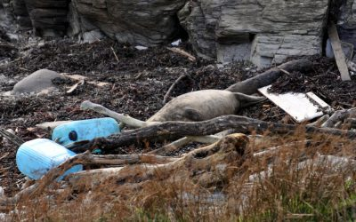MWDW's Plastic Free June
